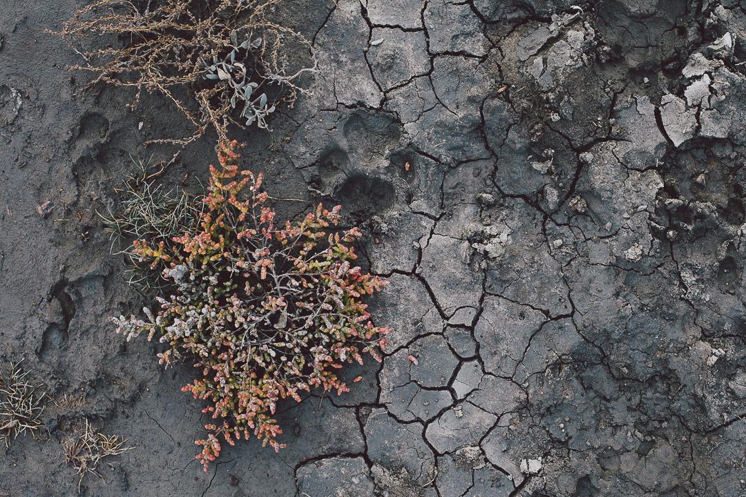 Die Salzwiesen im Herbst